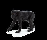 Mojo Animal Planet Makak chocholatý
