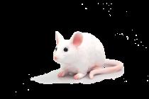 Mojo Animal Planet Myš