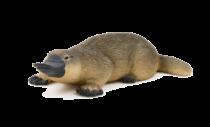 Mojo Animal Planet Ptakopysk podivný