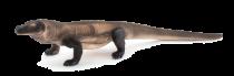 Mojo Animal Planet Varan komodský