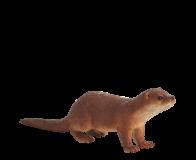 Mojo Animal Planet Vydra obecná