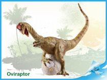Dinosaurus - Oviraptor