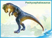 Dinosaurus - Pachycephalosaurus